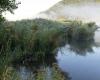 L'étang des Lésines l'été