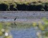 L'étang des Lésines et les oiseaux
