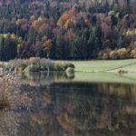 Les lésines couleurs d'automne