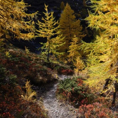 Lien des photos du Val de Rhêmes J5